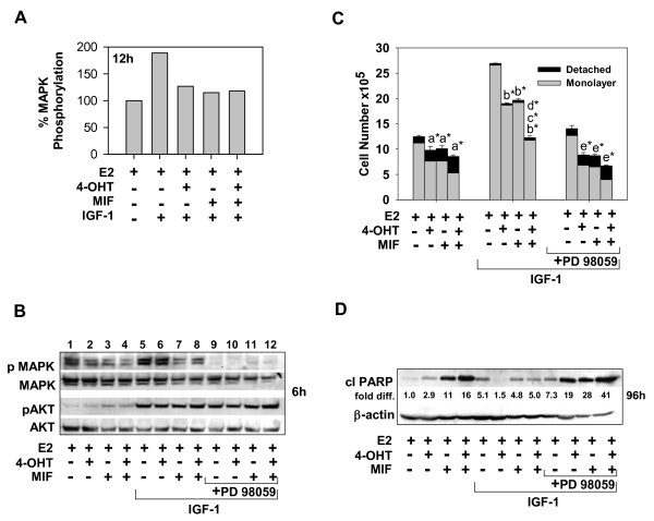 The IGF-1/MEK signaling axis blocks the cytotoxic action of 4-OHT and/or MIF-treatments of ER + breast cancer cells . (a) Graphic representation of Western blot data showing pMAPK1/2 levels in cells treated with hormones in the absence and presence of IGF-1. The pMAPK1/2 level in E2-treated cells were arbitrarily set to a value of 100%; total MAPK levels served as the loading control. (b) Effective and selective blockade of MAPK1/2 phosphorylation by the MEK1 inhibitor PD 98059. Total MAPK1/2 and AKT levels served as loading controls. (c, d) PD 98059 blocked the proliferative effects of IGF-1 and restored the ability of 4-OHT and/or MIF therapy to induce cell detachment and cleavage of PARP (apoptosis) in the MCF-7 cell populations treated with 4-OHT and/or MIF. fold diff ., levels of cleaved PARP after correction for differences in protein loading; β- actin levels served as loading controls. (a-d) Cells were treated for the indicated time periods with hormones, as indicated in the absence or presence of IGF-1 at 20 ng/ml and/or PD 98059 at 25 μ;g/ml and harvested for immunoblotting or cell counts, as described in Materials and Methods. Values are expressed as mean ± SD ( n = 3). Treatment effects on total cell number were determined to be significant when compared with (a) E2; (b) E2 + IGF-1; (c) E2 + 4-OHT + IGF-1; (d) E2 + MIF + IGF-1; (e) E2 + IGF-1 + PD 98059. * P
