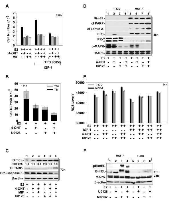 BimEL expression levels vary between ER + breast cancer cell models and correlate to apoptotic outcome in response to hormonal treatments and MEK1 blockade . (a, b) Cell-number determinations showed that IGF-1 stimulated T-47D cell growth via a MEK1-dependent proliferation pathway. T-47D cells were treated with the indicated hormones in the presence or absence of IGF-1 (20 ng/ml) plus and minus PD 98059 for 216 hours (a) or U0126 for 144 hours (b) . (c) Western blot showed BimEL levels relative to the levels of cle aved PARP in T-47D cells treated with hormones in the absence or presence of U0126 for 72 hours. The levels of ER and PR are provided for validation of the ER and PR status of T-47D and MCF-7 cells used in this study. (d) Western blot compared the levels of BimEL in MCF-7 versus T-47D cells treated with hormones plus or minus U0126 for 48 h. (e) ROS levels were determined for T-47D and MCF-7 cells treated with the indicated hormones in the presence or absence of IGF-1 plus or minus MEK1 blockade with U0126. (f) Western blot showed that treatment with MG132 caused an accumulation of phosphorylated Bim EL in MCF-7 cells, but not in T-47D cells. (a through f) As described in Materials and Methods, at the indicated times, cells were harvested and analyzed either for cell counts (a, b) , protein expression by SDS/PAGE and immunoblotting for BimEL, pBimEL, pro-caspase-3, pMAPK, and total MAPK or β-actin, which were used as loading controls (c, d) , or for ROS determination (e) .