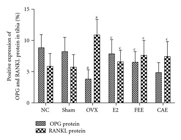 Effects of 12-week treatment with Cortex acanthopanacis extract (CAE) or Folium Epimedii extract (FEE) on protein expression of osteoprotegerin (OPG) and receptor activator of nuclear factor kappa-B ligand (RANKL) for the NC (normal control rats), Sham (rats with Sham operation), OVX (ovariectomized rats), E2 (rats treated with 17 β -estradiol), FEE (rats treated with FEE), and CAE (rats treated with CAE) groups. Results are expressed as mean ± SD, for n = 12. a P