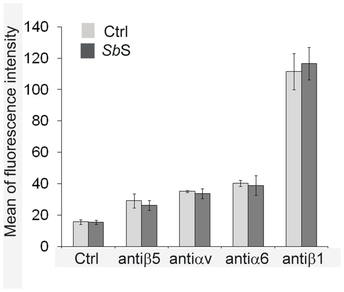 Impact of Sb S on integrin expression. Sub-confluent HCT-8/E11 cells were incubated for 5 h with (dark bars) or without (light bars) Sb S, then harvested and resuspended in the presence of anti-integrin subunit mAbs. After incubation with the appropriate secondary Alexa 488-conjugated Ab, cell-bound fluorescence was quantified using a Becton-Dickinson FACScan flow cytometer. Non-specific labeling was determined by incubating cells with the secondary Alexa 488-conjugated Ab alone (Ctrl). Data represent the mean+SD of 6 separate experiments.