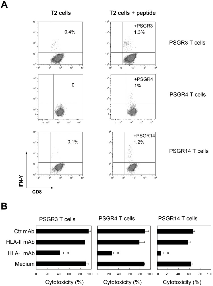 PSGR-derived peptide-induced T cell responses were CD8 + T cell dependent and restricted by HLA-I. PSGR-derived peptide-specific T cells were co-cultured with T2 cells pulsed with or without a given peptide in the presence of GolgiStop in a 48-well plate for 4 hrs at 37°C. Cells were stained with anti-CD8 and <t>anti-IFN-γ,</t> then analyzed on a FACScalibur machine (A). PSGR-derived peptide-specific T cells were co-incubated with LNCaP cells alone in medium, or with LNCaP cells in the presence of either anti-HLA-I mAb (W6/32), HLA-II mAb or a control mAb (anti-CD19 mAb). After 4 hours of incubation, the cytotoxicity against LNCaP was determined by the LDH assay (B). Data from B are plotted as means ± SD. Results are representative of three independent experiments. * P