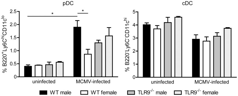 Increased proportion of splenic pDCs in MCMV-infected WT male mice. WT and TLR9 −/− male and female mice were left uninfected or infected i.p. with 1×10 5 PFU of MCMV and spleens were harvested 36 h later. Erythrocyte-depleted splenocytes were analyzed by flow cytometry for the expression of B220, CD11c and Ly6C. Upon MCMV-infection the percentage of pDCs (B220 + Ly6C hi CD11c lo ) is increased in all four mouse groups, while the percentage of cDCs (B220 − Ly6C − CD11c hi ) is slightly decreased. Interestingly, upon MCMV infection WT male mice showed statistically significant increased percentage of pDCs compared to WT females. Percentages on pDCs and cDCs are presented as mean ± SEM *p