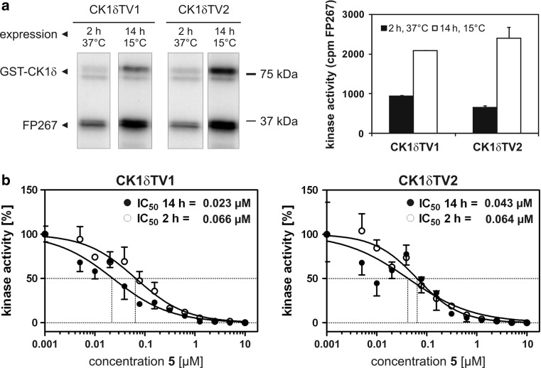 The degree of phosphorylation influences the activity of CK1δ transcription variants and modulates the inhibitory effects of compound 5 . a Comparision of substrate phosphorylation of CK1δ transcription variants induced at 15°C or 37°C. Purified CK1δTV1 and CK1δTV2 either having been induced for 2 h at 37°C or for 14 h at 15°C were used for phosphorylation of GST-mouse p53 1−64 in vitro. b Determination of the inhibitory ability of compound 5 towards CK1δ transcription variants differing in their phosphorylation degree. Compound 5 was tested for its ability to inhibit CK1δTV1 and CK1δTV2 which have either been induced for 2 h at 37°C or for 14 h at 15°C. A high degree of phosphorylation of both CK1δ transcription variants resulted in recuced inhibitory effects of 5 indicated by three- to fourfold higher IC 50 values