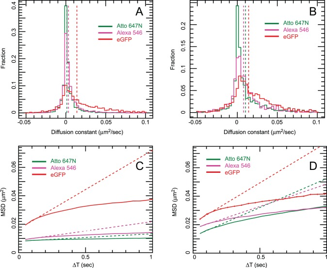 Side-by-side comparison of mean squared displacement (MSD) curves and diffusion coefficient (D) histograms from <t>CHO-EGFR-eGFP</t> cells grown on uncoated glass vs. linear-PEG+0.4 mM GRGDS-coated glass. Data were plotted from at least 15 areas acquired from 3 independent samples. Each MSD value comes from at least 6500 (ranging up to 300,000) individual separations, resulting in very small standard error in the MSD. Error bars are plotted but too small to be visible. Panels A (uncoated) and B (linear PEG + GRGDS): diffusion coefficient histogram of tracked spots. EGFR-eGFP (red), anti-EGFR <t>Affibody</t> Alexa 546 (magenta), anti-EGFR Affibody Atto 647N (green). Dotted lines show the mean D coefficient extrapolation. Panels C (uncoated) and D (linear PEG + GRGDS): Mean Square displacement plot. EGFR-eGFP (red), anti-EGFR Affibody Alexa 546 (magenta), anti-EGFR Affibody Atto 647N (green). Dotted lines show the mean D coefficient extrapolation.