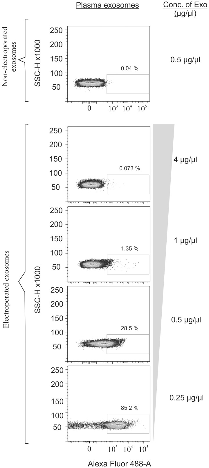 Exosome concentration affects electroporation efficiency. To determine the optimal exosome concentration for <t>transfection,</t> exosomes at four different concentrations (0.25–4 µg/µl) were mixed with an Alexa Fluor 488-tagged siRNA (2 nmol/ml) and electroporated. Samples containing exosomes and siRNA, without an electric pulse, were used as a negative control. To eliminate the excess siRNA, the exosomes were purified using latex beads and the presence of siRNA in the exosomes was determined by FACS analysis.