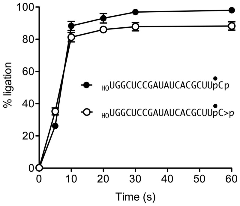 Kinetic profiles of 2′,3′-cyclic phosphate and 3′-phosphate ligation. Reaction mixtures containing 50 mM Tris-HCl (pH 8.0), 2 mM MnCl 2 , 0.1 mM GTP, 1 µM RtcB and 0.1 µM HO RNA > p (open circle) or HO RNAp (closed circle) substrates were incubated at 37°C. The reactions were quenched with EDTA at the times specified. The RNAs were digested with RNase T1 and analyzed by Urea–PAGE. The extent of ligation is plotted as a function of time. Each datum is the average of three independent experiments ± SEM.