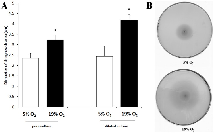 Motility of C. jejuni 81–176 on BHI+0.6% agar in <t>microaerobic</t> (5% O 2 ) and oxygen-enriched conditions (19% O 2 ) after 48 h at 42°C. Assays were performed with 2 µL of pure culture or 10 times diluted culture. (A) Mean diameters of three independent experiments. (B) Example of motility plates obtained after 48 h at 42°C with a diluted culture.