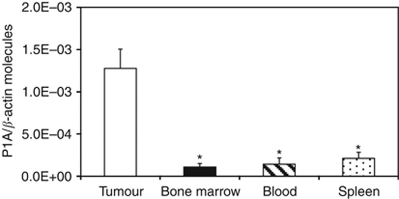 Quantitative RT–PCR analysis of P1A expression in tumour and normal tissues from 5-AZA-CdR-treated mice. Total RNA was extracted from tumour, bone marrow, blood, and spleen samples from 5-AZA-CdR-treated mice. Retrotranscribed RNA was subjected to SYBR Green quantitative real-time RT–PCR analysis using P1A- and β -actin-specific primers. Data are reported as P1A molecules/ β -actin molecules. Columns, mean values of P1A molecules/ β -actin molecules from six distinct mice; bars, s.d.; * P ⩽0.05 vs tumour samples.