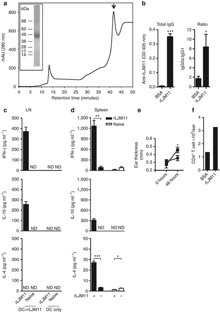 Immunity generated by recombinant LJM11 salivary protein (rLJM11) is polarized toward a T-cell helper type 1 (Th1) response . ( a ) <t>High-pressure</t> <t>liquid</t> <t>chromatography</t> (HPLC) purification of rLJM11 (↓). Inset: silver-stained gel of purified rLJM11. ( b–f ) C57BL/6 mice were immunized with 500 ng of either rLJM11 or BSA in the left ear. ( b ) Total IgG levels against rLJM11 and the IgG2a:IgG1 ratio. IFN-γ, IL-10, and IL-4 production following in vitro stimulation of lymph node (LN, c ) and ( d ) spleen cells with rLJM11. ( e ) Delayed-type hypersensitivity (DTH) response in mice immunized with rLJM11 (▪) or BSA (•). ( f ) The absolute number of CD4 + T cells per ear following sand fly challenge. * P