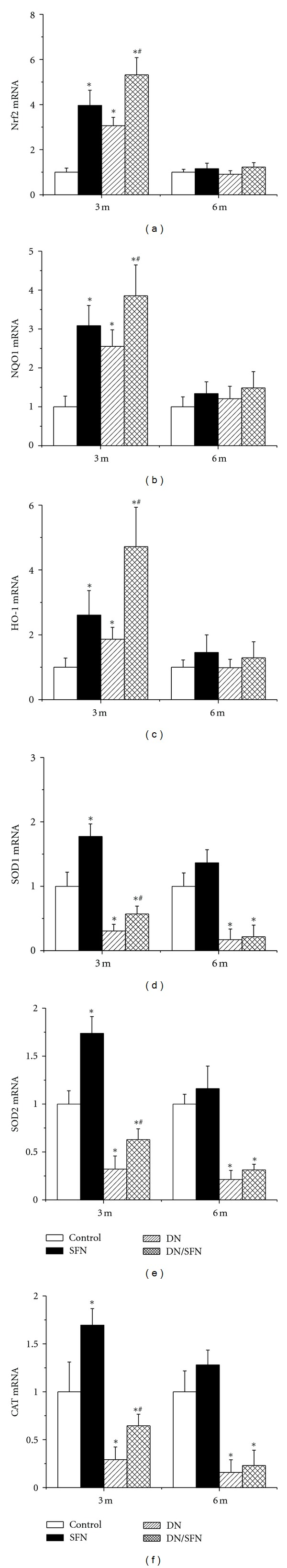 SFN upregulated renal expression of Nrf2 and its downstream genes at mRNA level. Nrf2 (a) and its downstream genes, NQO1 (b), HO-1 (c), SOD1 (d), SOD2 (e), and CAT (f) expression at mRNA level were detected by RT-PCR. Data were presented as means ± SD ( n = 6 at least). (* P