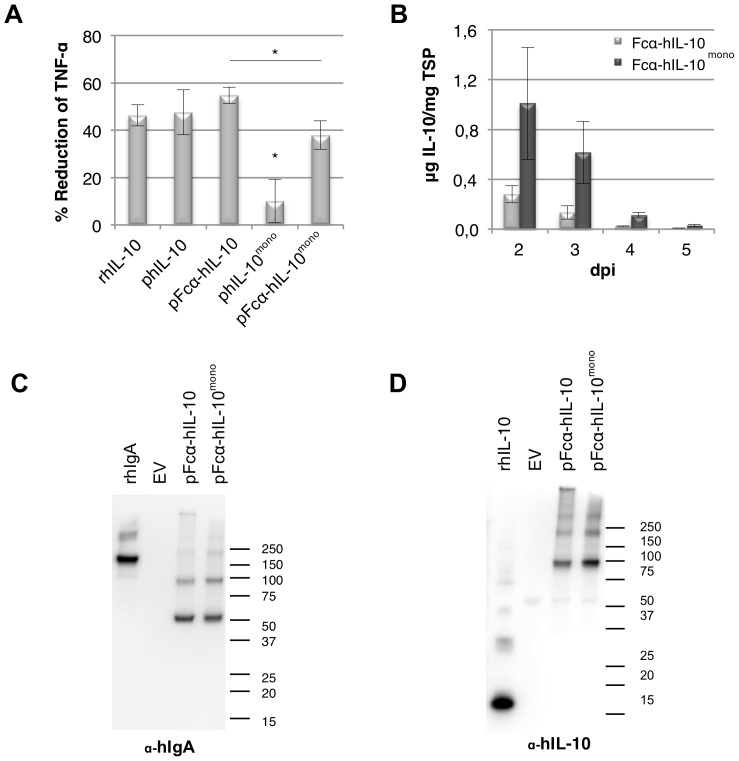 Analysis of biological activity and expression of human IL-10 and human IL-10 mono fused to Fcα. Forced dimerization of human IL-10 mono restores biological activity. (A) Bioactivity assay of hIL-10 mono and Fcα-hIL-10 fusion proteins on mouse macrophages (RAW267.4). Plant produced (p) and recombinant (r) E. coli produced hIL-10 were calibrated to contain the same amount of IL-10 as well as total soluble protein by using the empty vector control. Cells were then pretreated with 50 ng/ml hIL-10 for 20 min and subsequently stimulated with 1 µg/ml E. coli lipopolysaccharide. Tumor Necrosis Factor-alpha (TNF-α) expression was determined by ELISA and IL-10 activity is indicated as the percentage of inhibition of TNF-α expression as compared to the empty vector control ( n = 4, error bars indicate standard error). Significant difference ( P