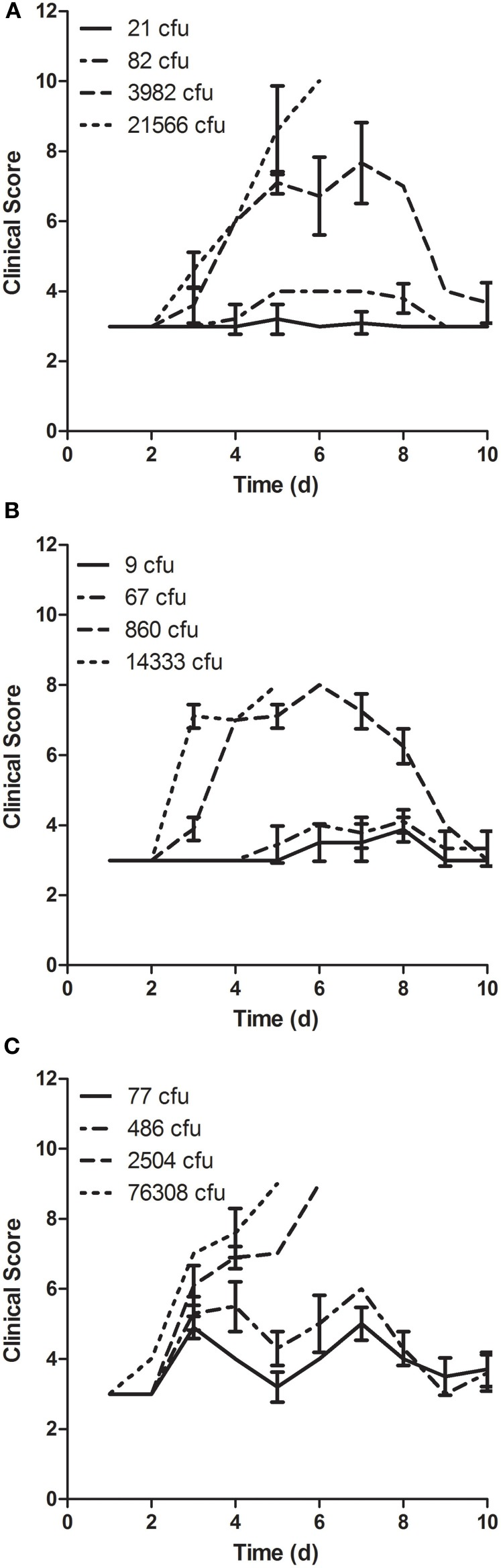 Clinical scoring of disease in mice after aerosol exposure to LVS grown in different culture media. Mice were scored daily beginning the day of exposure and continuing through day 10 after infection for changes in behavior and appearance. Mice were exposed to aerosols containing LVS grown in (A) MHb, (B) <t>CCDM,</t> and (C) <t>BHI</t> at a range of doses ( n = 10 per dose). Graphs show average daily score for each group; error bars show standard deviation.
