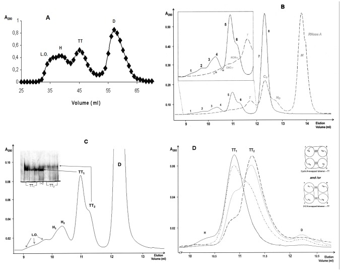 SEC chromatograms and PAGE under non denaturing conditions of <t>BS-RNase</t> aggregates obtained by lyophilising the protein from a 40% (v/v) acetic acid solution. ( A ) SEC pattern obtained with a Sephadex G100 column. Elution with ammonium acetate 0.1 M, pH 5.65, flow rate of 0.4 ml/min. ( B ) SEC chromatogram of BS-RNase <t>multimers</t> superimposed with that of RNase A oligomers: both patterns were obtained with a Superdex 75 10/300 GL column. Elution with 0.2 M NaPi, pH 6.7, flow rate 0.1 ml/min. ( C ) Enlarged Superdex 75 SEC pattern of BS-RNase aggregates; in the inset, 7.5% non denaturing PAGE of the two BS-tetramers, run-time 110 min. ( D ) Additional purification of the two BS-RNase tetramers: their mixture was concentrated to 25 µl in 0.4 M NaPi, and re-chromatographed in the Superdex 75 column equilibrated with the same buffer (dashed+dotted line). Then, TT 1 and TT 2 fractions were further purified: once for TT 1 , continuous line; twice for TT 2 , dotted and dashed lines, respectively. In the right part of the panel are reported the models of two N-swapped BS-RNase tetramers proposed by Adinolfi et al. [13] : they cannot be associated to both tetramers. The various BS-RNase species are: D, native dimer; TT 1 and TT 2 , two tetrameric conformers, H (1 and 2), hexamers; L.O., larger oligomers. Concerning RNase A, grey italics labels: M , native monomer, N D , N-terminal-swapped dimer, C D , C-terminal-swapped dimer; T , trimers; NCN TT : double N+C-swapped tetramer; CNC TT : double C+N-swapped tetramer; P* : pentamers; H* : hexamers. The asterisk* is present to mention that P and H positions are derived from data obtained in [21] .