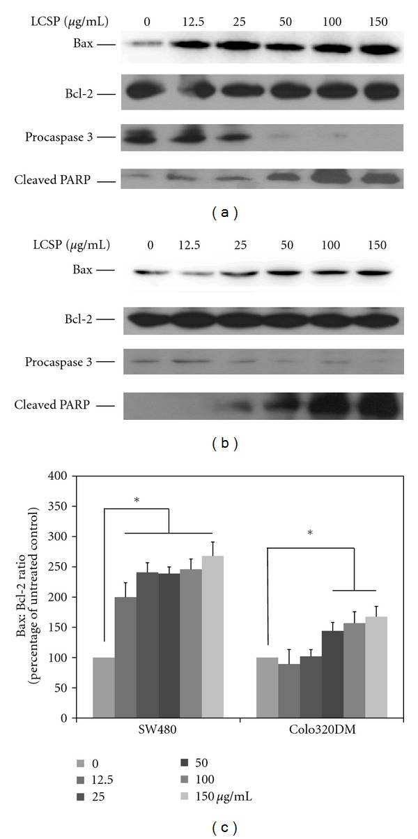 Immunoblots of apoptosis-controlling proteins in LCSP-treated colorectal carcinoma cells. The cell lysates from LCSP-treated SW480 (a) and Colo320DM (b) were separated by SDS-PAGE, transferred to PVDF membranes, and immunoblotted to show the levels of Bax, Bcl-2, procaspase 3 and cleavage-PARP. The protein levels of Bax and Bcl-2 were quantified using ImageJ software according to the density of each band on the immunoblotting image, normalized to the reference band ( β -actin), and presented as the fold of the untreated control. (c) The data reported are the averages of three independent experiments and are expressed as means ± SD. *Represents a significant difference ( P