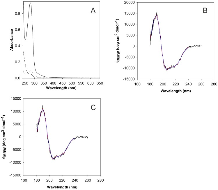 Absorption spectra (A) and circular dichroism (CD) spectra of refolded CoxD kept in the absence (B) or presence of ATP-γ-S (C). Solubilized CoxD (5.5 mg ml −1 ) was refolded by rapid dilution (50-fold) in ice cold aqueous Tris (20 mM) under magnetic stirring. The solution was immediately adjusted to pH 9.0 (A, dashed line) and subsequently brought to pH 8.0 (A, dotted line) in pH increments of 0.2 per 24 h as specified in   Materials and Methods . Then the protein was concentrated to 1.04 mg ml −1  by ultra-filtration (A, solid line). The CD spectra of CoxD (0.471 mg ml −1 ; 10 mM KH 2 PO 4 /KOH, pH 8.0) are shown in (B). The CD spectra of CoxD (0.537 mg ml −1 ; 10 mM KH 2 PO 4 /KOH, pH 8.0) in the presence of 0.1 mM MgATP-γ-S are shown in (C). After 2 h of incubation with MgATP-γ-S, excess nucleotides were removed by gel filtration on Sephadex G-25. All data were recorded at 20°C. Raw data are shown in black. The smoothed data used for secondary structure estimation and the back-calculated CD-spectrum based on deconvolution with the CDSSTR algorithm   [21]  is depicted in red and blue, respectively. For further details refer to   Materials and Methods .