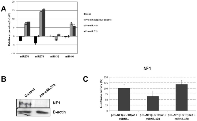 Functional analysis showing that miR-370 regulates NF1 . (A) miRNAs expression analysis by real-time PCR after transfection with pre-miRs-370, −379, −432 and −494. (B) Western blot showing NF1 after transfection with pre-miR-370. (C) Luciferase assay showing changes in luciferase activity after transfection with pre-miR– (negative control) or pre-miR-370 in cells expressing the 3′UTR region of NF1 that includes the miR-370 seed region [pRL-NF1(3′UTR)wt]. Transfection with the 3′UTR region of NF1 including a mutated seed region for miR-370 was used as control.