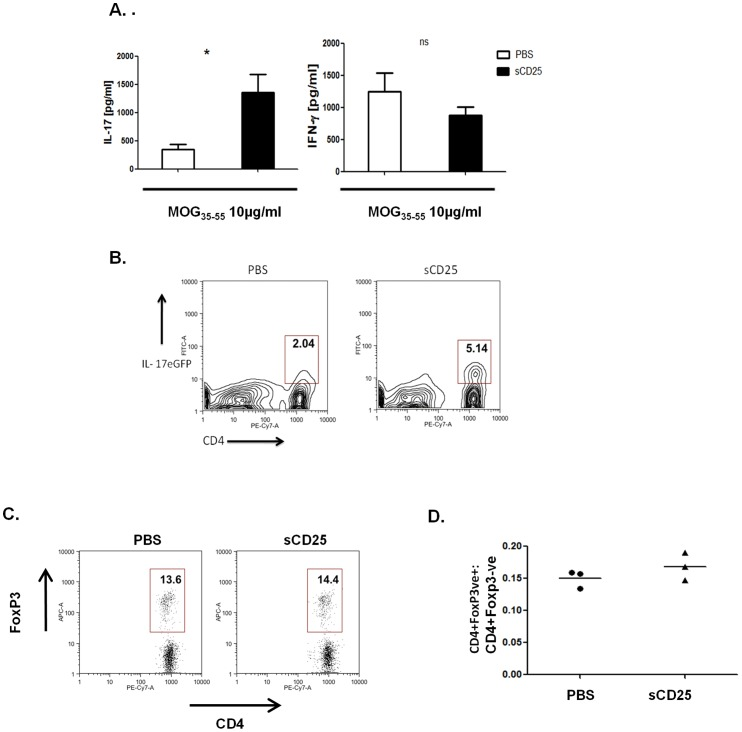 sCD25 enhances peripheral antigen specific Th17 responses. ( A ) Levels of IL-17A and IFNγ secreted by draining lymph node cells of mice immunized and treated as above (3 per group), isolated after 9 days, and restimulated ex vivo with MOG 33−55 (10 µg/ml) for 72 hours. ( B ) Percentage of CD4+ IL-17A-eGFP+ve cells after treatment as above and ex vivo restimulation for 72 hours. ( C ) Percentage and ( D ) relative number ratios of CD4+FoxP3+:CD4+FoxP3- T cells in the draining lymph nodes of both sCD25 and control treated immunized mice. 3 mice per group were analysed. Data in D G is representative of mean +/− standard deviation. Statistical Significance determined by unpaired student's t-test, * p≤0.05, **p≤0.01.