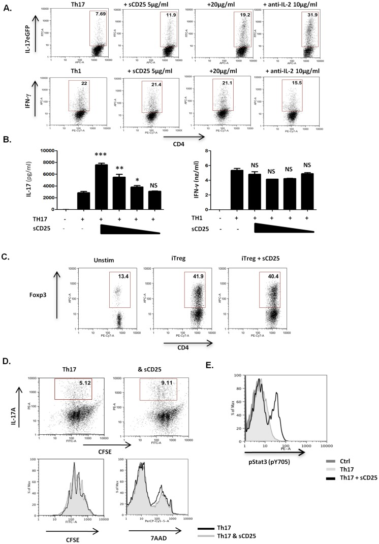 sCD25 enhances Th17 cell responses in vitro . ( A B ) Purified naive CD4+ T cells were activated under either Th17 or Th1 inducing conditions (as described in methods ) in the presence of a range of concentrations of sCD25 (20, 10, 5 or 1 µg/ml) or anti-IL-2 (10 µg/ml). Levels of IL-17A or IFNγ expression were determined after 96 hrs by ( A ) FACS and ( B ) ELISA. ( C ) Purified naive CD4+ T cells were activated under Treg inducing conditions, as described in methods , in the presence or absence of sCD25 (20µg/ml) and FoxP3 expression determined by FACS. ( D ) Naive CD4+ T cells were stained with CFSE (2.5 µM) prior to activation under Th17 conditions in presence or absence of sCD25 (20 µg/ml). After 96 hours, levels of intracellular IL-17A expression and CFSE dilution or 7AAD incorporation were determined by FACS. ( E ) Purified naive CD4+ T cells were activated under Th0, Th17 and Th17 sCD25 (20 µg/ml) conditions for 72 hours and levels of P-Stat3 (pY705) determined by FACS. All data are representative of 3 independent experiments. Statistical Significance determined by unpaired student's t-test, ∗ p≤0.05, **p≤0.01, ***p≤0.001.