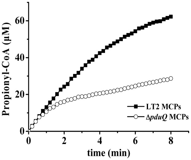 PduQ regenerates NAD + for the PduP reaction in purified Pdu MCPs. The PduP activity of purified MCPs was measured by monitoring the absorbance increase at 232 nm due to propionyl-CoA formation. Limiting NAD + (40 µM) was added in the assays. The propionyl-CoA produced by wild-type MCPs and ΔpduQ MCPs, respectively, reached 62.3 and 27.6 µM in 8 min. Because the concentration of propionyl-CoA produced by the wild-type exceeded the amount of NAD + added to the reaction (the PduP reaction produces 1 NADH per propionyl-CoA formed) recycling of NADH to NAD + is indicated.