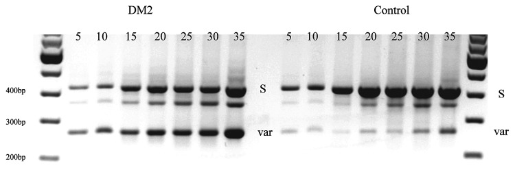 Summary of splice variants of CLCN1 -RNA in the m-RNA region between exons 5 and 8 comparing different studies with our data ( 9 , 10 ). The positions of the pre-mature stop codons of the splicing variants are indicated. The last line,