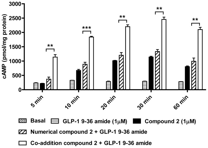 Time course of cAMP generation in response to GLP-1 9–36 amide, compound 2 or co-stimulation in HEK-GLP-1R cells. HEK-GLP-1R cells were either untreated (Basal; not visible) or treated for the indicated times with GLP-1 9–36 amide (1 µM), compound 2 (1 µM) or the two in combination (Co-addition) in the presence of IBMX. The final concentration of DMSO (vehicle) was 5% v/v in all cases. In addition to the measured levels of cAMP generation, the numerical sum of cAMP generation in response to GLP-1 9–36 amide and compound 2 alone are presented (Numerical). Data are mean±s.e.m., n=3, ** P