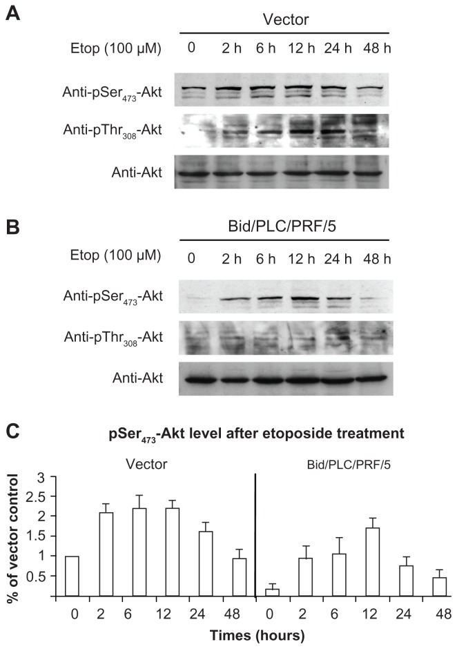 Bid-overexpression on the activation of Akt in response to etoposide. Vector control ( A ) and Bid/PLC/PRF/5 cells ( B ) were treated with etoposide for different periods, respectively. Then, p-Akt was detected by Western blot analysis. All blots were subsequently stripped and reprobed with antibodies against Akt. The density of pSer 473 -Akt protein bands was determined ( C ). Abbreviation: Bid, BH3-interacting domain death agonist.