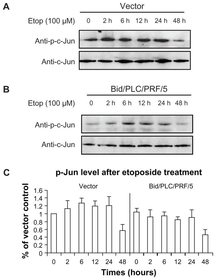 Effects of Bid-overexpression on the phosphorylation of c-Jun in response to etoposide. Vector control ( A ) and Bid/PLC/PRF/5 cells ( B ) were treated with etoposide for different periods, respectively. Then, p-c-Jun was detected by Western blot analysis. All blots were subsequently stripped and reprobed with antibodies against c-Jun. The density of p-c-Jun protein bands was determined ( C ). Abbreviation: Bid, BH3-interacting domain death agonist.