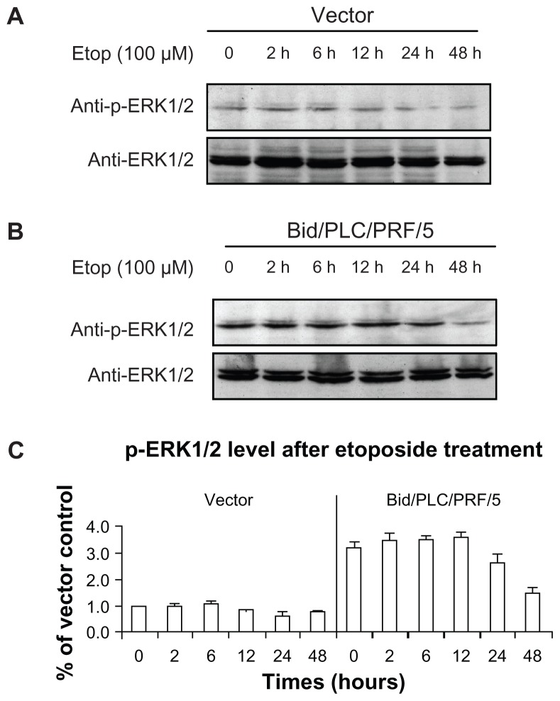 Effects of Bid-overexpression on the phosphorylation of ERK1/2 in response to etoposide. Vector control ( A ) and Bid/PLC/PRF/5 cells ( B ) were treated with etoposide for different periods, respectively. Then p-ERK1/2 was detected by Western blot analysis. All blots were subsequently stripped and reprobed with antibodies against ERK1/2. The density of p-ERK1/2 protein bands was determined ( C ). Abbreviation: Bid, BH3-interacting domain death agonist.