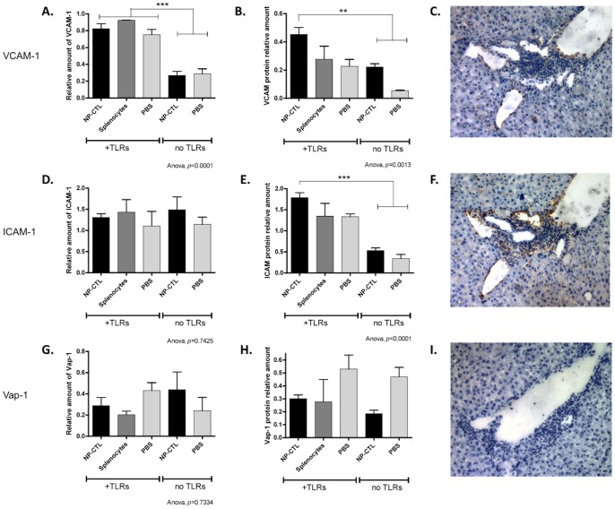 Adhesion Molecules VCAM-1 and ICAM-1, but not Vap-1, are Up-regulated in Response to Autoreactive Cells and TLRs Stimulation. Levels of specific mRNAs ( A, D, G ) and proteins expression ( B, E, H ) in the liver were measured for VCAM-1 ( A–C ), ICAM-1 ( D–F ) and Vap-1 ( G–I ). Only VCAM-1 mRNA was up-regulated in response to TLRs stimulation (ANOVA, p