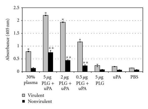 Cleavage of the plasmin-specific chromogenic substrate by plasmin-bound leptospires. Live low-passage virulent and high-passage nonvirulent L. interrogans serovar Copenhageni cells received the following treatments: PBS only (PBS), uPA alone (uPA), 5 μ g PLG alone (PLG), PLG in crescent quantities (0.5, 2 and 5 μ g) together with uPA, and 30% human plasma together with uPA (30% plasma). Bars represent mean absorbance as a measure of relative substrate degradation ± the standard deviation of three replicates for each experimental group and are representative of three independent experiments. *Virulent leptospires experiments: statistically significant ( P