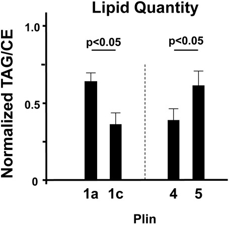 Relative change in TAG- or CE-specific intracellular lipid storage upon expression of various Plin proteins. AML12 cells were transiently transfected with the indicated GFP–Plin-expressing constructs and cultured overnight in the presence of oleic acid and cholesterol. <t>Transfection</t> efficiencies were confirmed by visualizing GFP fluorescence. Untransfected cells, cultured with/without exogenous oleic acid and cholesterol, were grown in parallel. LSDs were isolated by centrifugation and lipids were extracted, separated by TLC in parallel with lipid markers, and TAG and CE detected after staining with iodine vapor. Relative TAG/CE ratios were quantified in cells transfected with each specific Plin-expressing construct and analyzed in parallel with identically grown untransfected cells for normalization and TLC background correction. The TAG/CE ratio for untransfected lipid-loaded cells (controls) was set to 0.5. The relative TAG/CE-ratio of Plin1a- and Plin1c-expressing cells were always analyzed in parallel and normalized to those of control cells, and then secondarily compared to results determined for its Plin-expressing counterpart. Values > 0.5 indicate a proportional increase in TAG lipid bias, whereas values