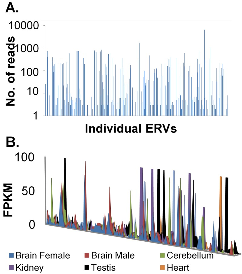 Expression of endogenous proviral chains in CEFs and various chicken tissues. (A) mRNA-seq reads were uniquely aligned with the genome. The mRNA-seq reads mapping to any given endogenous proviral chain were counted and plotted on a log scale. The x axis represents unique endogenous proviruses identified by ReTe, with increasing scores from left to right. (B) RNA-seq data from various chicken tissues ( 33 ) were aligned using TopHat ( 47 ), and transcripts were constructed using Cufflinks ( 48 ). Transcripts that overlap ERV coordinates were extracted, and the number of fragments per kilobase per million (FPKM) was plotted against ERV chains. On the x axis, from left to right, are unique ERV chains with increasing ReTe chain scores.