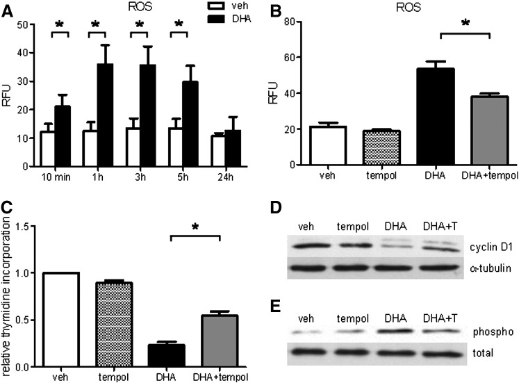 Free radical scavenger Tempol attenuates DHA-induced oxidative stress and UPR and improves cell proliferation. (A) Cells were loaded with 10 μM H 2 DCFDA for 30 min followed by exposure to veh or DHA (100 μM) for indicated time periods up to 5 h, followed by flow cytometry. For the 24-h time point cells were incubated with veh or DHA for 23.5 h and then loaded with H 2 DCFDA for 30 min in the presence of veh or DHA, followed by flow cytometry. (B) Cells were preincubated with Tempol (150 μM) or veh (DMSO) for 2 h (90 min before loading and during 30-min loading with H 2 DCFDA). Thereafter, the cells were exposed to DHA in the presence or absence of Tempol for 3 h, followed by ROS measurement. (C) [ 3 H]Thymidine incorporation in veh- or DHA-treated hPASMCs in the absence and presence of Tempol. (D) Representative Western blot of cyclin D1 protein expression in veh- or DHA-treated hPASMCs in the presence and absence of Tempol. (E) Representative Western blot of phosphorylated eIF2α in veh- or DHA-treated hPASMCs in the presence and absence of Tempol. Total eIF2α served as loading control. Data are given as means ± SEM of at least five independent experiments. * P