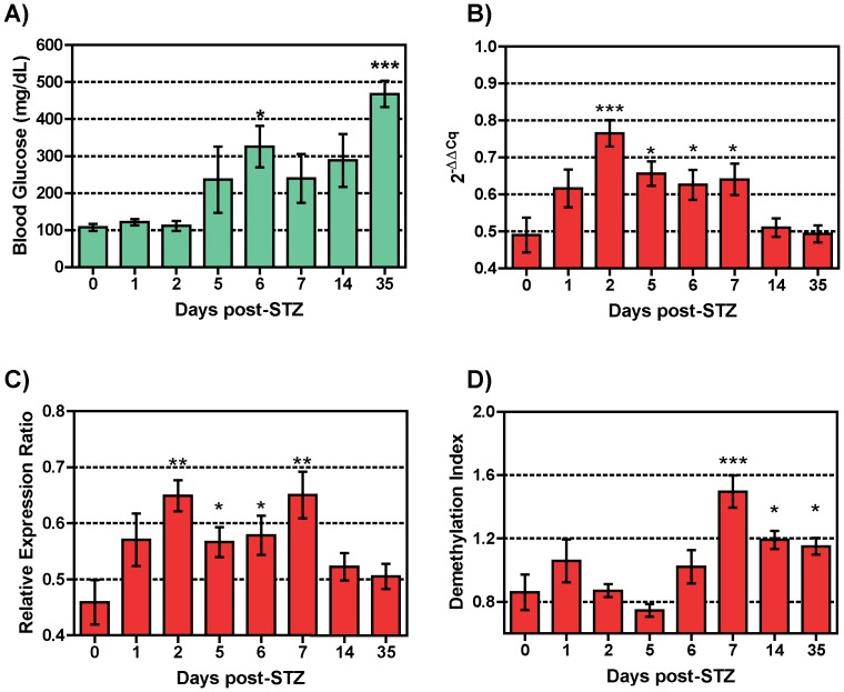 Quantification of circulating beta cell DNA in STZ-treated diabetic mice. NOD/scid mice were injected with STZ at days 0, 1, and 2, and blood was collected pre-treatment and post-treatment days 1, 2, 3, 5, 6, 7, 14, and 35. A) Blood glucose levels for untreated (n = 3) and STZ-injected (n = 34) NOD/scid mice were measured at days 1 (n = 6), 2 (n = 4), 5 (n = 4), 6 (n = 8), 7 (n = 4), 14 (n = 4) and 35 (n = 4) after injection. In parallel, qMSP was done using bisulfite converted gDNA obtained from the blood of untreated (n = 3) and STZ-treated mice at designated time points. Fold changes in demethylation are measured by calculation of ΔΔC q (B), Relative Expression Ration (C) or Demethylation Index (D) for each sample using methylation-specific primers P12/P13 and bisulfite-specific primers P16/P17. The cloned Ins2 gene was used for normalization and standardization of the results as described under Material and Methods. The data display the mean ± standard error (SEM) of three independent measurements. The statistical significance was calculated with the Student t test for unpaired values and significance level indicated by asterisks (*, P