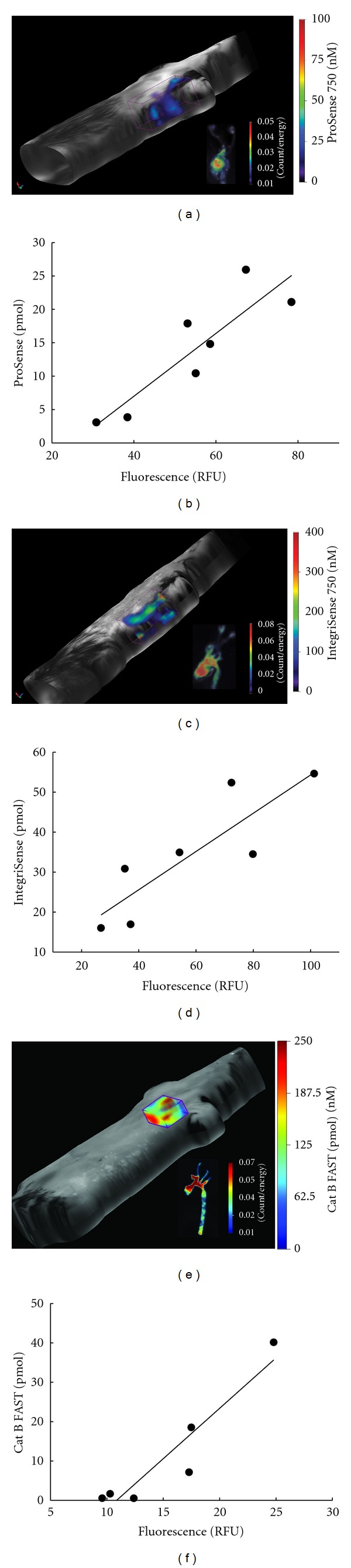 Examples of in vivo FMT images of apoE −/− mice and ex vivo fluorescence images of the corresponding areas of dissected arteries and correlation between the in vivo and ex vivo measurements. (a), (b) ProSense ( r = 0.89, P