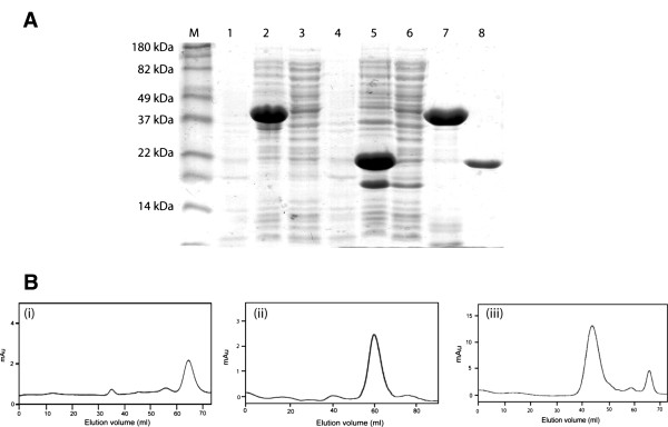 ( A ) SDS PAGE gel showing the heterologous expression of PnpE1 and PnpE2 in E. coli <t>BL21</t> AI. The lane M: Marker; Lane 1 4: Uninduced supernatant of pnpE1 and pnpE2; Lane 2 5: Induced whole cell lysate of pnpE1 and pnpE2; Lane 3 6: Supernatant of pnpE1 and pnpE2 (pnpE1 not present in the supernatant); Lane 7 8: purified and pnpE1 (refolded) and pnpE2 respectively ( B ) Size exclusion chromatography of subunits of hydroquinone dioxygenase using sephacryl-200 ( i ) Gel filtration of PnpE1 eluted at 59.1 ml from the column and found to be a monomer of 40 kDa, ( ii ) Gel filtration of PnpE2 eluted at 65 ml and found to be a monomer of 20 kDa, ( iii ) Mixture of both the subunits found to be eluted at approximately 44 ml and the molecular weight of the hydroquinone dioxygenase predicted as approximately 120 kDa.