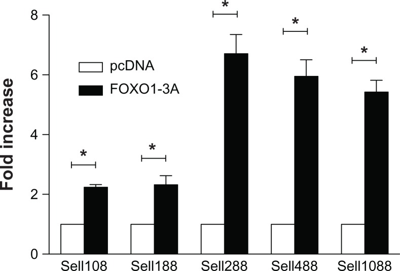 Locating the FOXO1 motif. Notes: Jurkat cells were transiently co-transfected with either pcDNA3 (open bars) or FOXO1-3A (solid bars) and one of the 5′ serial deletion mutants as labeled. Luciferase activity normalized to that of Renilla activity was analyzed 30 hours after the co-transfection. Data were presented as mean ± SD of at least three independent experiments in triplicate on each transfection. Data were graphed as fold increase relative to that of pcDNA3 co-transfected Jurkat cells, which was set as 1.