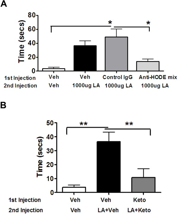 Effect of anti-HODE Antibodies and Ketoconazole on LA-evoked Nocifensive Behavior. A. Rats were injected with 1:1CFA and 24 hours later, were injected with either vehicle, control IgG anti-goat antibody or mix of anti-9 and 13-HODE antibodies (25ug each). Following 10 minutes, a second injection of either vehicle or 1000ug LA was given and nocifensive behavior was recorded upto 15 mins. Data plotted is the total nocifensive time (secs) observed between 8 and 15 mins. n = 8/10 was used for each group. Data analyzed using one-way ANOVA with Neuman-Keuls post hoc test. Error Bar: S.E.M. B. Similar to data set 4A, rats were injected with vehicle or 4ug ketoconazole as the first injection into the inflamed paws and 30 minutes later, vehicle or 1000ug LA with vehicle or 1000ug LA with 4ug ketoconazole was given as the second injection. Data plotted is the total nocifensive time (secs) observed between 8 and 15 mins. n = 8/10 was used for each group. Data Analyzed using one-way ANOVA with Neuman-Keuls post hoc test. Error Bar: S.E.M.