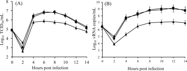 Growth kinetics of rD72G and rD72N mutant viruses. BHK-21 cells were infected and harvested at different times post infection. ( A ) Single-step growth curves obtained by titration of virus present at each time. Samples were taken in triplicates and standard deviations are shown in the graphic. ( B ) RNA production curves were obtained by real time RT-PCR assay from Trizol resuspended monolayers. The mean viral load generated by real time RT-PCR is expressed as log 10 vRNA copies/ml of virus transport medium. Samples were taken in triplicates and standard deviations are shown in the graphic. (◆) FMDV Asia1/YS/CHA/05,(■) rD72G and (▴) rD72N.