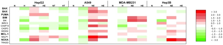 Effect of hypoxia, etoposide and paclitaxel on the mRNA expression level of genes involved in the apoptotic pathway. HepG2, A549, MDA-MB231 and Hep3B cells were incubated 16 hours under normoxia (N, 21% O 2 ) or hypoxia (H, 1% O 2 ) in the presence or not of etoposide (E, 100 µM in Hep3B cells and 50 µM in the other cell types) or paclitaxel (T, 10 µM) in HepG2 cells. After incubation, total RNA was extracted, submitted to reverse transcription and then to real-time PCR in the presence of SYBR Green and specific primers. Actual numerical values are provided in Table S3 . Genes shown in bold are genes whose expression was assessed at the protein level by western blot analyses.