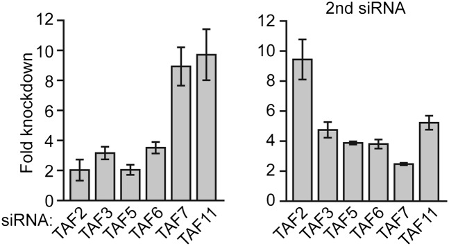 siRNA-mediated knockdown efficiency of TAFs in H9 hESCs. qRT-PCR analysis monitoring TAF expression in H9 cells treated with two independent siRNAs ( A ) directed against the indicated TAF. TAF expression is specified relative to that obtained with a control luciferase siRNA, which was set to 1. Data are represented as mean ± SD. DOI: http://dx.doi.org/10.7554/eLife.00068.011