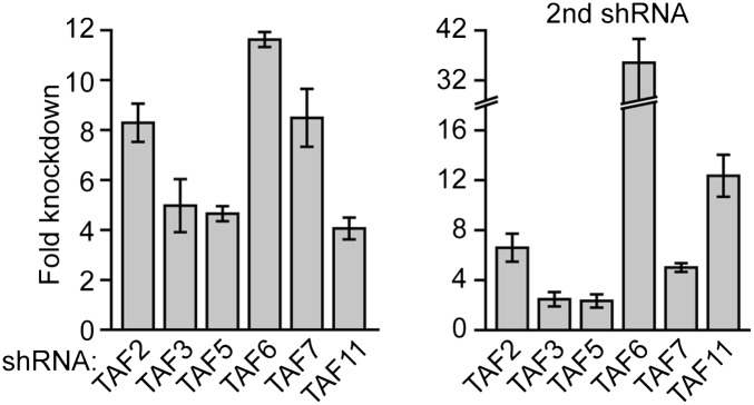 shRNA-mediated knockdown efficiency of TAFs in H9 hESCs. qRT-PCR analysis monitoring TAF expression in H9 cells treated with two independent shRNAs directed against the indicated TAF. TAF expression is specified relative to that obtained with a control non-silencing shRNA, which was set to 1. Data are represented as mean ± SD. DOI: http://dx.doi.org/10.7554/eLife.00068.020