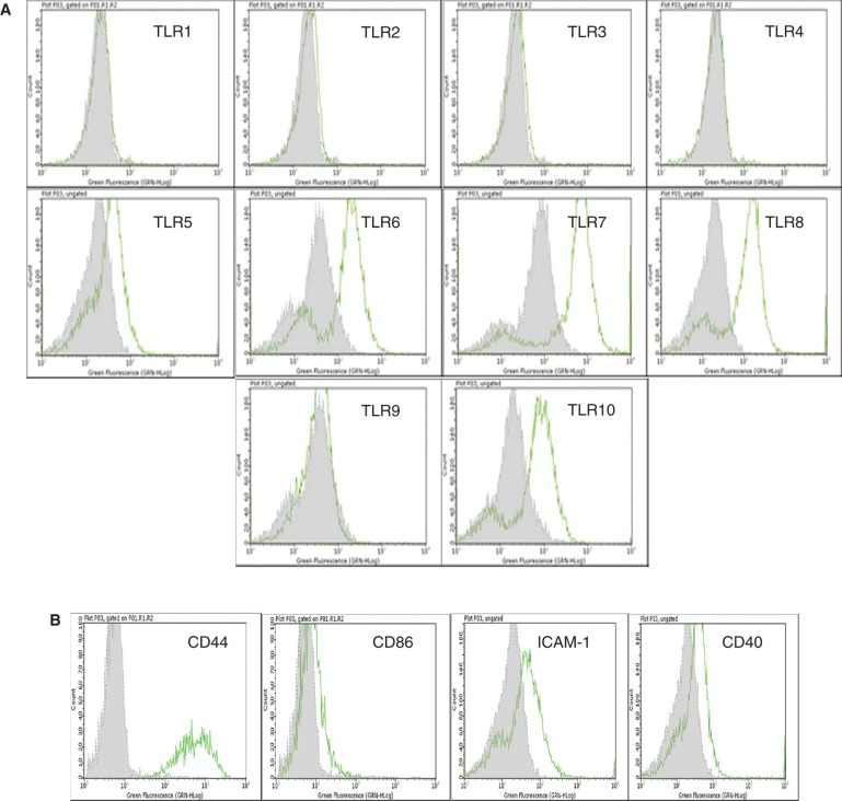 Flow cytometric analysis of cultured human EpCAM-positive cells. (A) Flow cytometric results are presented in the form of histograms. Representative histograms for expression of TLRs in enterocytes are shown. Primary enterocytes did not express TLR-1, -2, -3, -4 and -9. They weakly expressed TLR-5, but demonstrated strong expression of TLR-6, -7, -8 and -10. The expression of TLRs was observed only in saponin-treated cells. (B) Isolated human enterocytes also stained positive for several immune recognition molecules such as CD44, CD86, ICAM-1 and CD40. Staining with only the secondary antibody served as negative control (grey filled histogram).