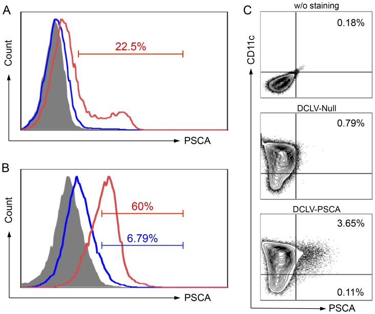 Targeted transduction and delivery of PSCA antigen gene into dendritic cells (DCs) by DCLV-PSCA. (A) <t>293T</t> cells were transfected transiently with plasmids FUW-Null (mock control, blue line) or FUW-PSCA (red line). Two days later, cells were collected and stained for PSCA expression analyzed by flow cytometry. 293T cells stained with the isotype antibody were included as a control (grey shade area). (B) 293T cells were transfected transiently with plasmids FUW-PSCA, SVGmu, and other necessary lentiviral packaging plasmids to produce DCLV-PSCA vectors. Fresh virus supernatant was used to transduce 293T cells (blue line) or 293T.hDC-SIGN cells (red line) with MOI = 10. PSCA expression was analyzed by flow cytometry 3 days post-transduction. (C) Bone marrow-derived DCs were transduced with a mock vector DC-LV-Null or DC-LV-PSCA vector. Five days later, CD11c and PSCA expression were assessed by flow cytometric analysis. All experiments were repeated three times and the representative data is shown.
