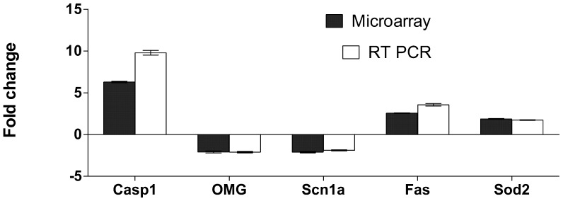 RT- PCR validation of 5 genes expressed differentially in the spinal cords of Lewis rats with MBP induced EAE. Tissue samples were snap frozen in liquid nitrogen and stored at −80°C prior to total RNA preparation using the QIAGEN RNeasy Lipid tissue kit. RNA quality analysis was carried out on the BioRadExperion automated electrophoresis system. All preparations used in both assays had RNA quality indicator (RQI) values of > 9.5. For RT-PCR, total RNA was reverse transcribed and amplified as described in the methods. Analysis of selected genes up or down regulated at the peak of disease in EAE. Bars represent the average fold change between expression in the spinal cord level at peak of disease compared to normal healthy animals (+/− SEMs, Microarray n = 4, RT-PCR n = 8). Dark columns represent fold change derived from the microarray data. Similar amplification patterns were obtained from RT-PCR amplification of the same total RNA samples and a second set of 4 animals samples at an identical time point.
