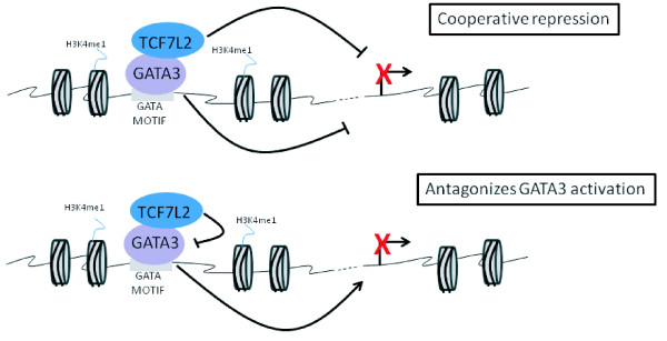 Two modes of TCF7L2-mediated transcriptional repression of GATA3 target genes . (a) GATA3 tethers TCF7L2 to the genome and both factors cooperate to repress target genes. (b) GATA3 tethers TCF7L2 to the genome with TCF7L2 antagonizing GATA3-mediated transcriptional activation.