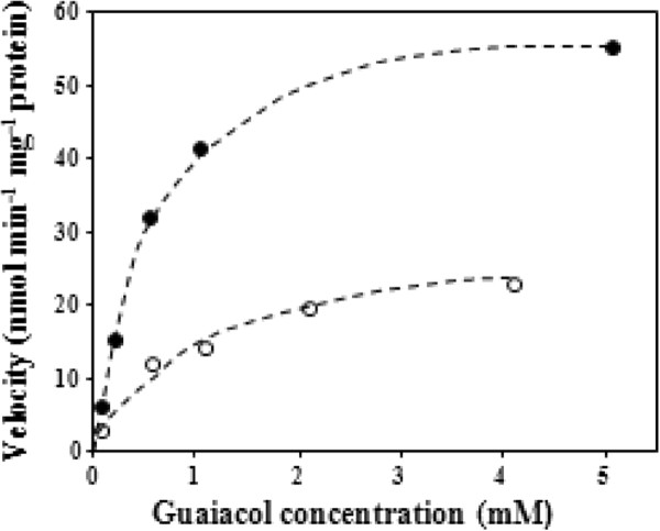 Velocity versus substrate curves for SlGOMT1 (closed circles) and SlGOMT2 (open circles) with increasing amounts of guaiacol.