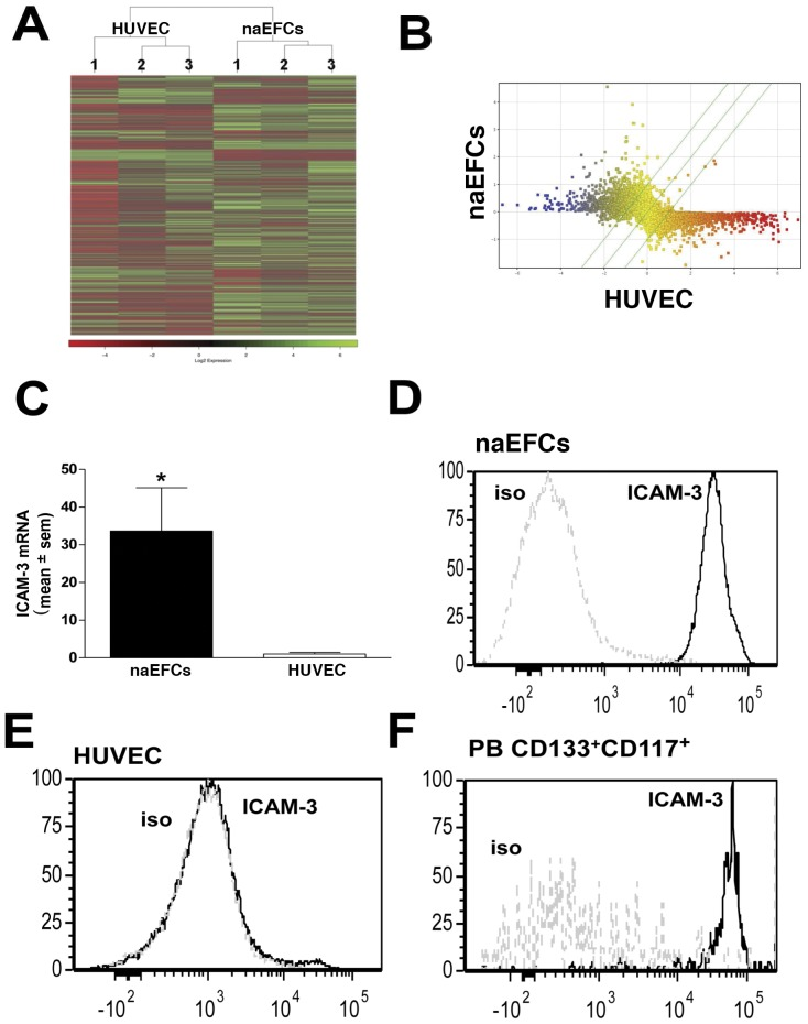 Gene expression analysis of naEFCs versus HUVEC. In (A), a heat map illustrating the hierarchical clustering of Log2 relative gene expression in 3 separate HUVEC and naEFC samples. In (B), scatter data showing the average gene expression data in naEFCs and HUVEC. The dots represent the gene expression of UCB CD133+ 4 day cultured naEFCs versus HUVEC. The diagonal lines indicate the cut off value of 1.5 fold activation and genes coloured on the basis of expression level (yellow, evenly expressed genes; blue, naEFC upregulated genes; red, naEFC downregulated genes). In (C), ICAM-3 mRNA levels in naEFCs and HUVEC as determined by qPCR with relative gene expression normalised to CycA. Data are expressed as relative fold change (mean ± sem) normalised to HUVEC, n = 3,* p
