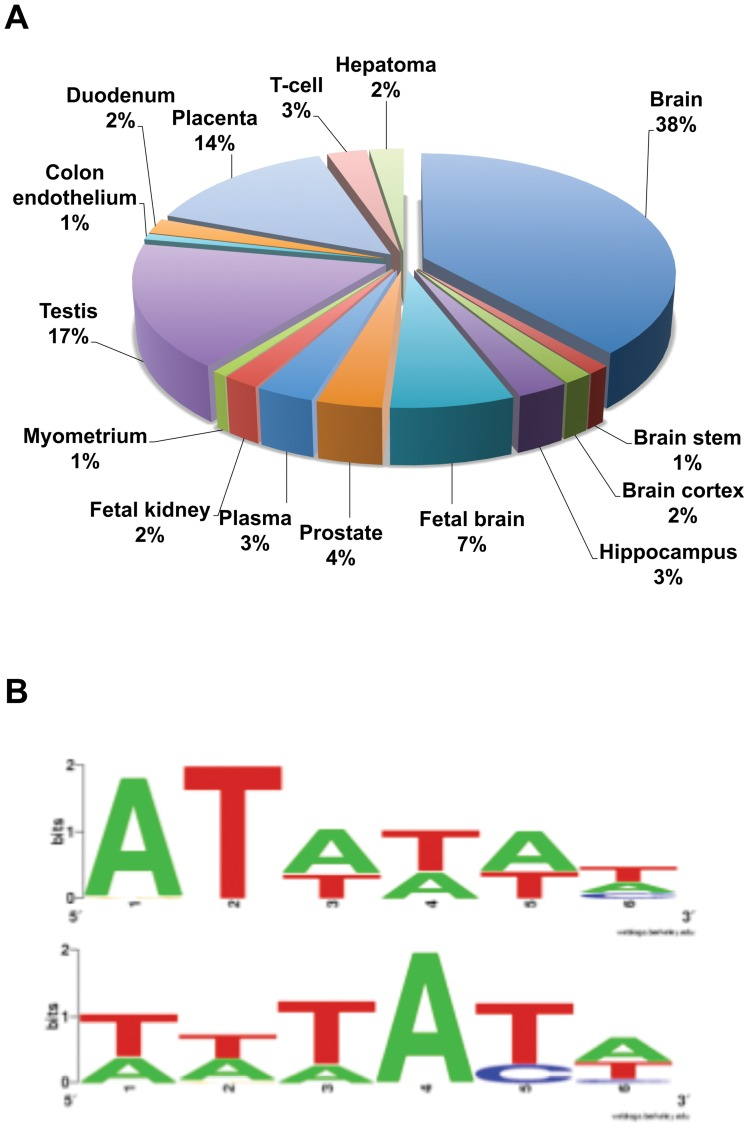 Bioinformatic analysis of the top 286 GBX2 target genes. (A) Tissue expression analysis for the top 286 genes targeted by GBX2 determined by DAVID. Of the top 286 genes targeted by GBX2, 51% are expressed in the nervous system: 38% brain, 1% brain stem, 2% brain cortex, 3% hippocampus, 7% fetal brain. (B) The top two GBX2 DNA-binding consensus motifs bioinformatically determined by Motif Sampler analysis of GBX2 ChIP-Seq target sequence fragments.