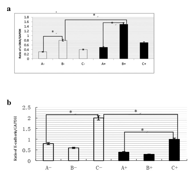 Ratio of α-SMA (a) and E-cadherin/GAPDH (b) in each group. (A) control group; (B) liver fibrosis model group; (C) BMP-7-treated group. −, Primary rat hepatocytes (1×10 6 /dish) were cultured for 48 h in F12 medium containing 10% fetal bovine serum and 2  μ g/ml insulin until they had adhered. +, Primary rat hepatocytes (1×10 6 /dish) were cultured for 48 h in F12 medium containing 10% fetal bovine serum and 2  μ g/ml insulin until they had adhered. To induce EMT, the media was replaced with F12 media supplemented with 0.5% fetal bovine serum and 200 mg/ μ l insulin containing Snail for 96 h.  * P